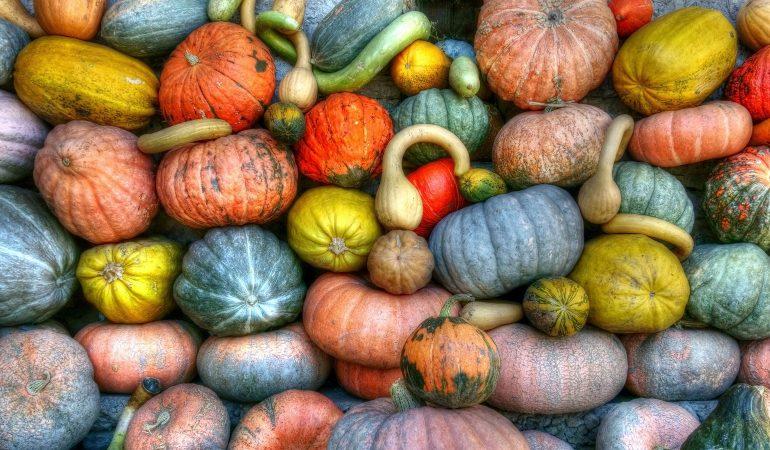Viele Kürbisse unterschiedlicher Form und Farbe liegen nebeneinander.